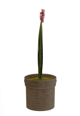 Small decorative tree Stock Photo - 11075665