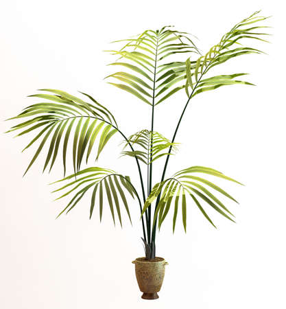 Small decorative tree Stock Photo - 11075666