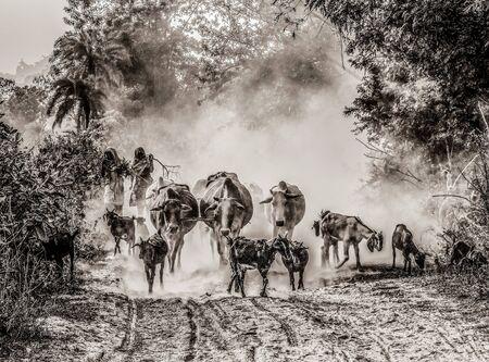 Nature of chuadanga