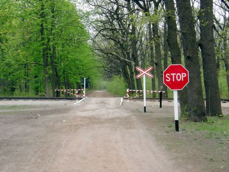 forest railroad: The railroad crossing in the forest