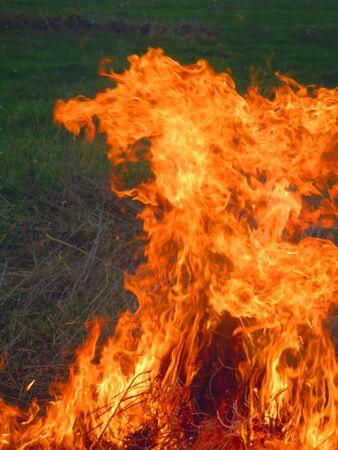 suffocating: fiamma che brucia l'erba Archivio Fotografico
