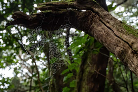 Spider cobweb with water droplets in a forest