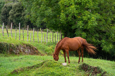 A brown horse grazes and wags its tail on a farm pasture surrounded by a fence and trees
