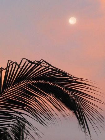 Tropical moon one