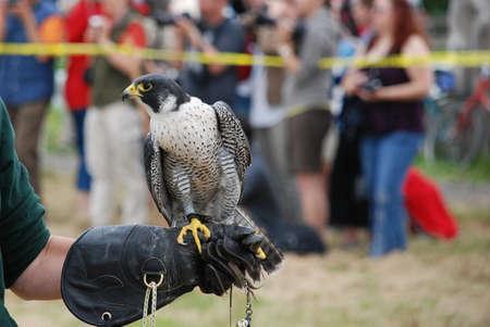 handler: Bird Handler Stock Photo