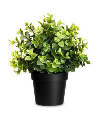 흰색 배경에 집 식물