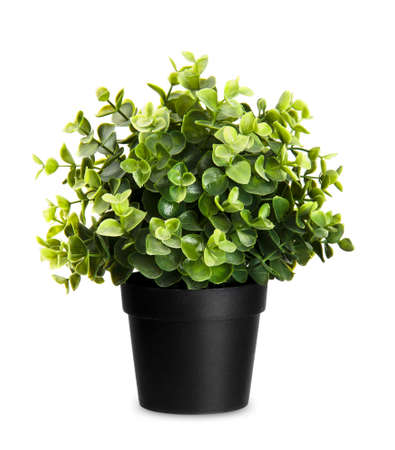house plant: House plant on a white background Stock Photo