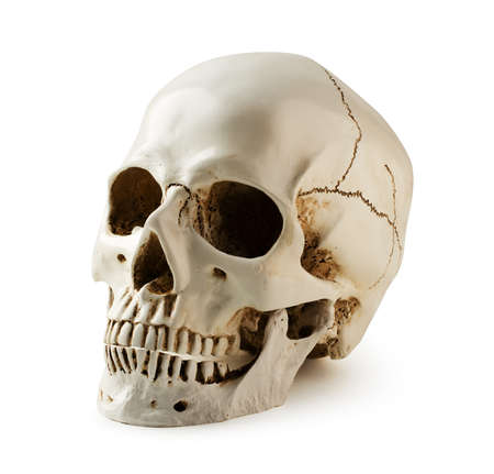 Human skull, decoration on halloween isolated on white background with clipping path 스톡 콘텐츠