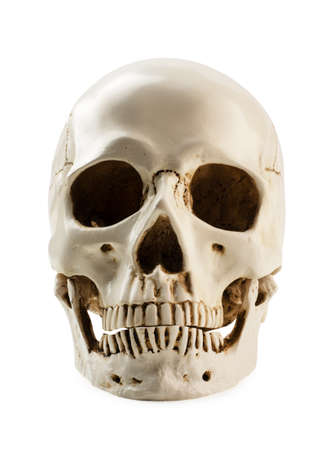 Front side view of human skull isolated on a white background. Halloween decoration Stock Photo - 133780251