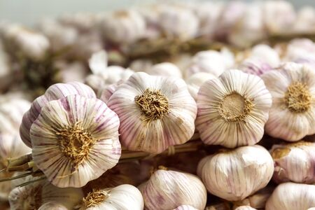 many pink garlic heads in rows and stacks, wholesale Фото со стока