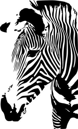 Zebra Stock Vector - 6259741