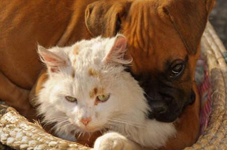 A small cat and a small dog playing together as good friends photo