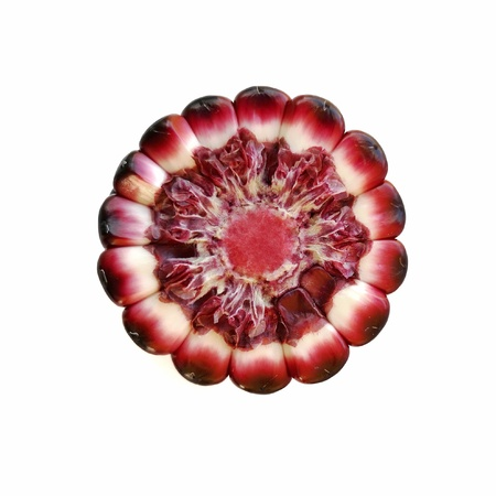 Cross section of purple maize ear that show colors of cob and kernel.