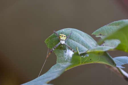 wolf spider on leaf