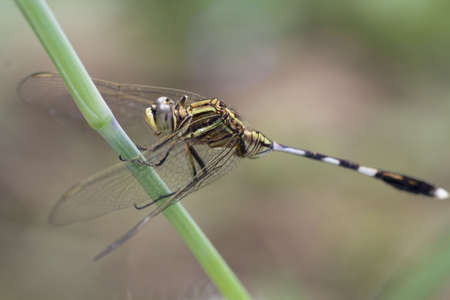 macro animals: Dragonflies, insects, animals, nature, macro Dragonfly - focus on the eye