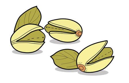 Pistachio.Isolated nut on white background. Vector illustration
