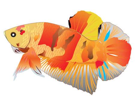 Siamese fighting fish 2 向量圖像
