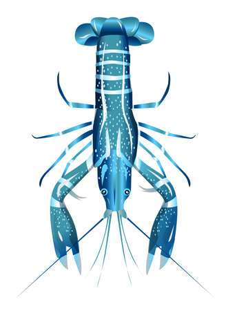 Vector illustration, crayfish.  Vector delicacy river lobster, langoustine or spiny lobster or crustacean delicacies isolated on blue background. Ilustrace