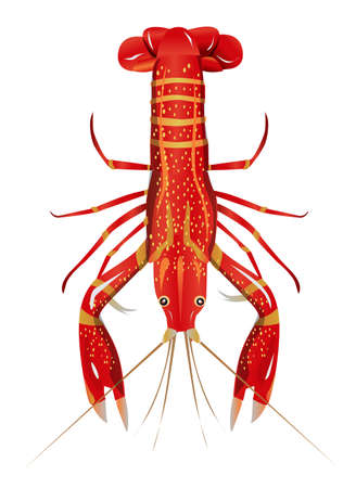 Vector illustration, crayfish.  Vector delicacy river lobster, langoustine or spiny lobster or crustacean delicacies isolated on blue background. 矢量图像