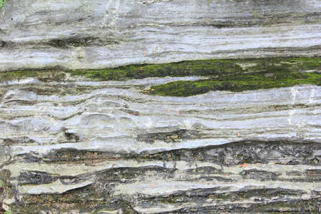 Detail texture of old stone with green moss