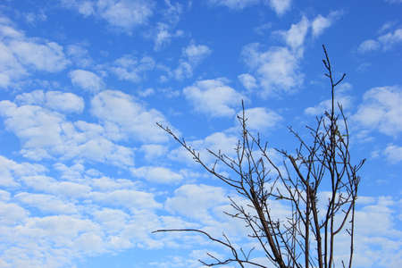 Dry tree branch and blue sky Imagens