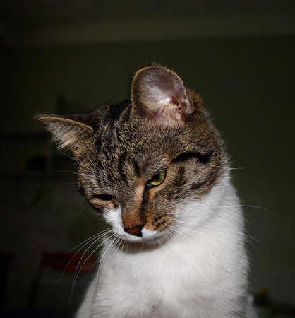 guile: cat
