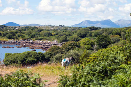 connemara: A rugged landscape in Connemara, Co. Galway, Ireland.