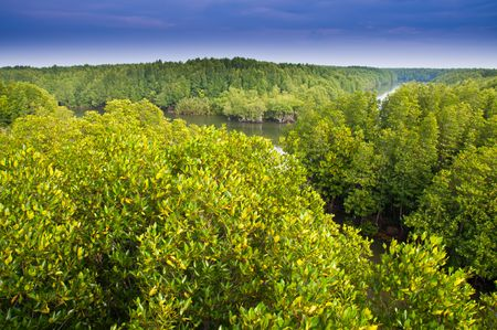 Mangrove forest and blue sky at Tard Thailand. Stock Photo - 8211971