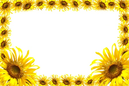 Sun flower frame isolated on white background  photo