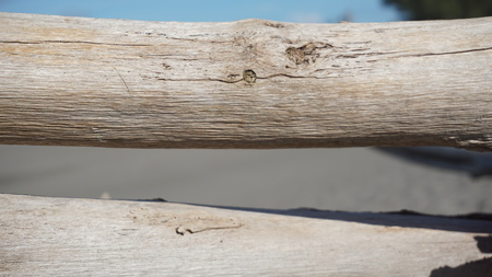 wood motif, wood texture can be used as the background of a picture