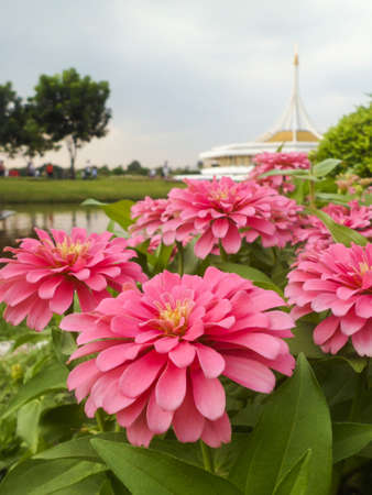 rama: Suan Luang Rama IX Stock Photo