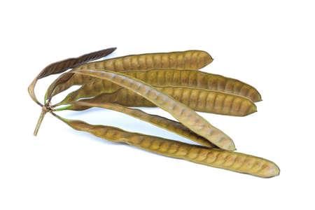 expel: Leucaena leucocephala isolated on white background  Stock Photo