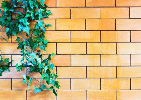 Ivy on Brick Wall  photo