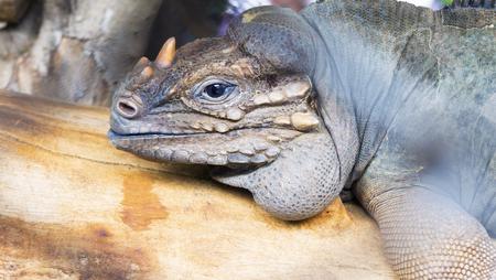 africa chameleon: Chameleon Stock Photo
