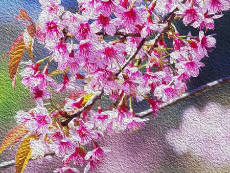 sakura arbol: Sakura fondo del �rbol Foto de archivo