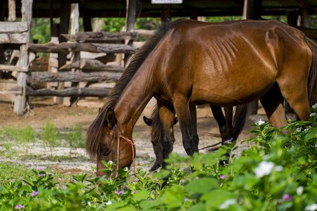 ?Brown horse eating grass Stock Photo