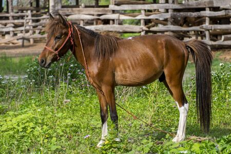 brown horse: Brown horse portrait Stock Photo