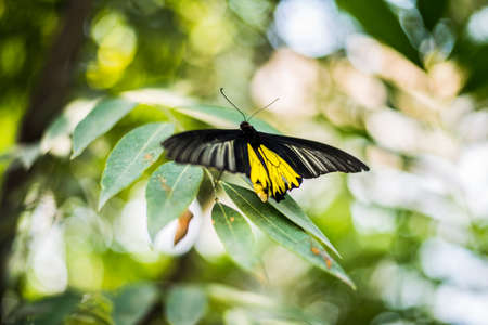 Beautiflu yellow butterfly in Thai park. photo
