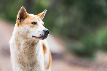 Dog looking to right side