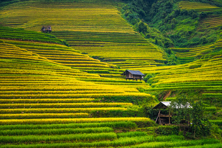 Beautiful landscape of rice terrace fields in Mu Cang Chai, Vietnam