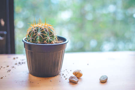 Interior room: Small Cactus in a pot by the window. Soft focus