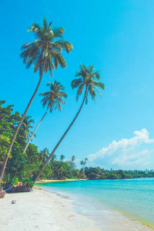 Coconut trees on a beautiful beach on a bright sky.