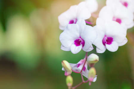Beautiful orchid flower with natural background.