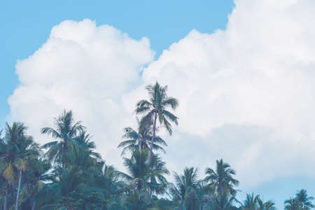 Coconut trees that stretch along the beach and clouds floating in the background Stock Photo