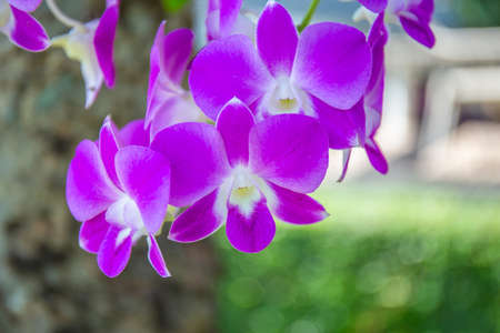 Purple orchids on a bouquet at the beach in the morning