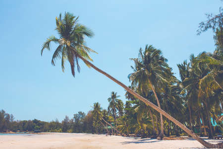The coconut trees at the beach sticking out to the sea