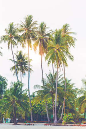 Coconut trees sticking out to the sea on a clear sky day, Koh Kood, Thailand