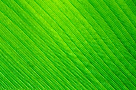 Close up image of green leaf