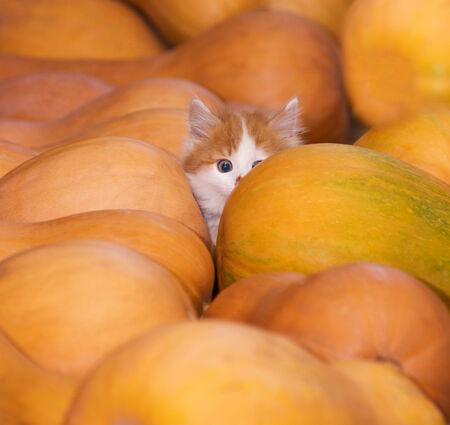 gato jugando: jugando con un gato