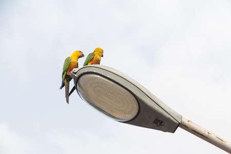 lovebirds: Two parrot on Light Street.